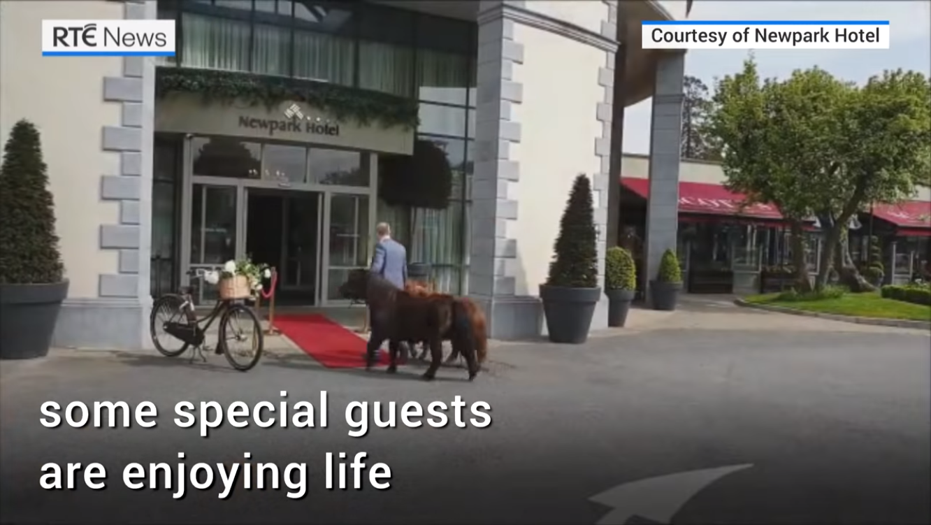 Special guests enjoying life at Kilkenny hotel amid coronavirus restrictions